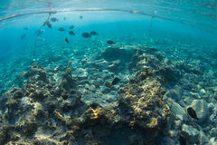 Underwater world. Coral and fish in the sea at one meter deep Stock Photos