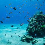 Underwater world. Coral and fish in the sea at ten meters Stock Photos