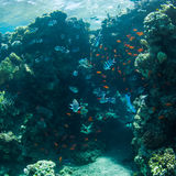 Underwater world. Coral and fish in the sea at ten meters Stock Photo