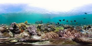 Coral reef with fish underwater 360VR. Camiguin, Philippines