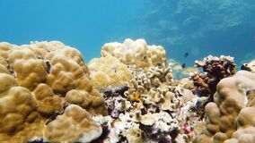 The underwater world of a coral reef. Leyte, Philippines.
