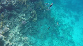 Underwater World corals and beautiful fish stock video footage