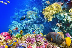 Underwater world with corals and tropical fish. Royalty Free Stock Photo