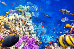 Underwater world with corals and tropical fish. Stock Photos