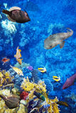 Underwater world with corals and tropical fish. Royalty Free Stock Photos