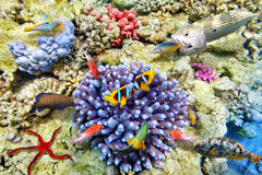 Underwater world with corals and tropical fish. Stock Photography