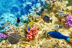 Underwater world with corals and tropical fish. Royalty Free Stock Photography