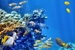 Underwater world with corals and tropical fish. Stock Images