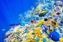 Underwater world with corals and tropical fish. Royalty Free Stock Image