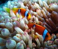 Underwater world in deep water in coral reef and plants flowers flora in blue world marine wildlife, Fish, corals and sea creature stock images