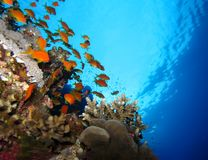 Underwater world in deep water in coral reef and plants flowers flora in blue world marine wildlife, Fish, corals, dolphins. Underwater world in deep water in stock image