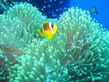 Underwater world in deep water in coral reef and plants flowers flora in blue world marine wildlife, Fish, corals and sea creature stock photos