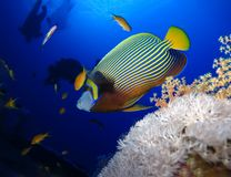Underwater world in deep water in coral reef and plants flowers flora in blue world marine wildlife, Fish, corals, dolphins. Underwater world in deep water in stock photography