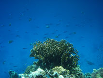 Underwater world. Detailed view of the sea corals Royalty Free Stock Photography