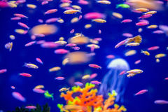 Underwater world fish Aquarium Royalty Free Stock Images