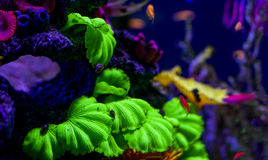 Underwater world fish Aquarium Royalty Free Stock Image