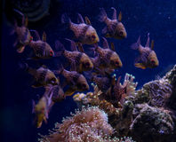 Underwater world fish Aquarium Stock Images