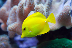 Underwater world.Fishes in corals Stock Images