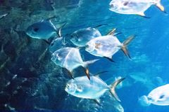 Underwater world landscape ,Colorful coral reef with fish stock image
