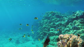 Underwater world with a lot of exotic fish, corals and beautiful sun rays. Butterfly fish of the Red Sea stock footage