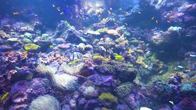Underwater world - sea, ocean, fish, coral. Underwater world - ocean fish and coral stock video
