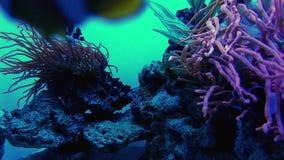 Underwater world in oceanarium. Underwater world in aquarium of oceanarium stock video