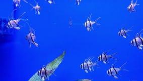 Underwater world in oceanarium. Underwater world in aquarium of oceanarium stock video footage