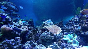 Underwater world in oceanarium stock footage