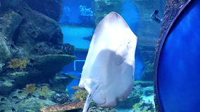 Underwater world in oceanarium stock video footage