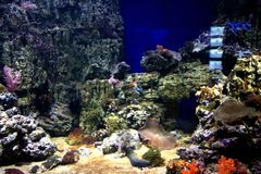 Underwater World Oceanarium in Moscow. Moskvarium. Stock Photography
