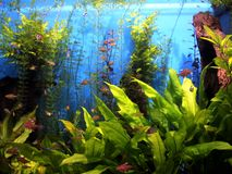Underwater World Oceanarium in Moscow. Moskvarium. Stock Photography