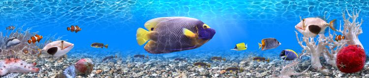 Underwater world - panorama. It is very colourful photo of the underwater world and  its inhabitants - exotic fishes Stock Image