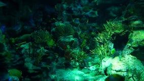 Underwater world stock video