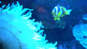 The underwater world stock footage