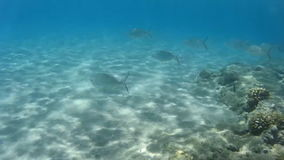 The underwater world of the Red Sea. Egypt stock footage