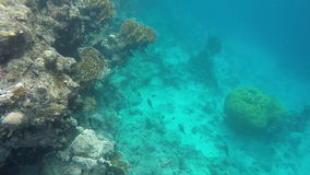 The underwater world of the Red Sea stock video footage