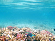 Underwater world. Reefs, coral any many nice fishes in the red sea Stock Photo