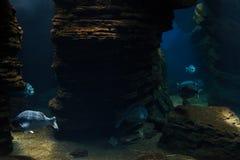 Underwater world. School of fish Stock Image