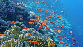 Underwater world of the Red Sea stock images