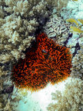 The underwater world Royalty Free Stock Images