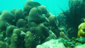 Underwater World. Sea scenery underwater in Thailand stock footage