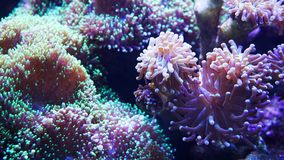 Underwater world of Sea, seaweed and corals stock image