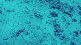 Underwater world. Seabed research in Andaman sea stock video