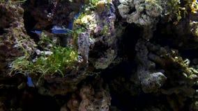 Underwater world. Seahorse. Undersea life rare animals of Moskvarium stock video
