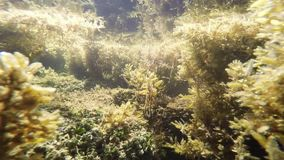 The underwater world in a small river. stock video footage