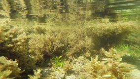 The underwater world in a small river. stock footage