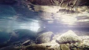 The underwater world in a small river. Reflection of water. And fish stock video footage