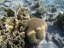 Underwater world. Snorkeling around Hurghada, egypt.2013 Stock Images