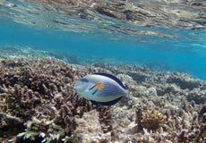 Underwater world. Snorkeling around Hurghada, egypt.2013 Royalty Free Stock Image