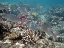 Underwater world. Snorkeling around Hurghada, egypt.2013 Stock Photo
